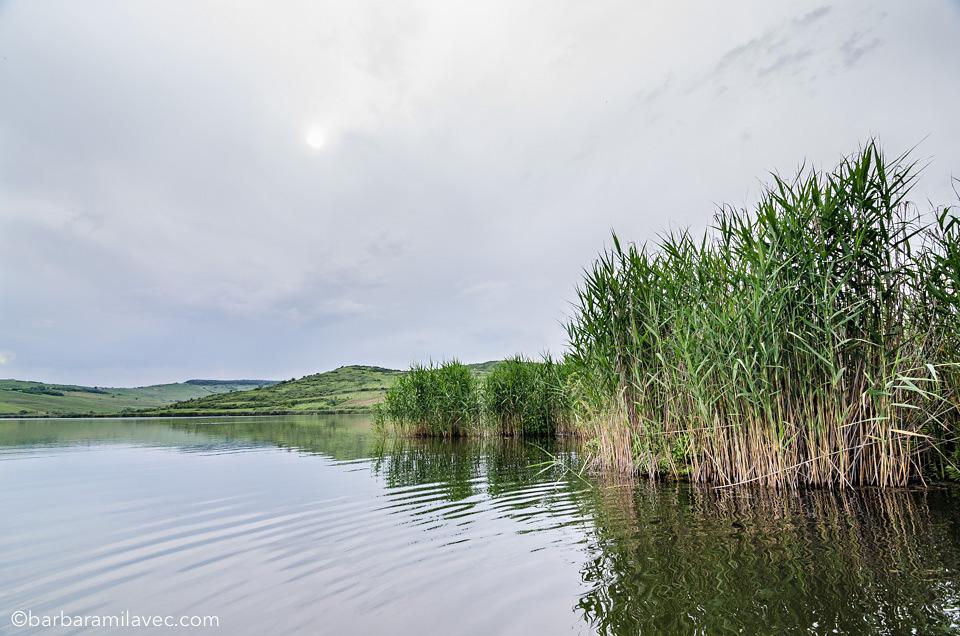 03-nature-conservation-photographer