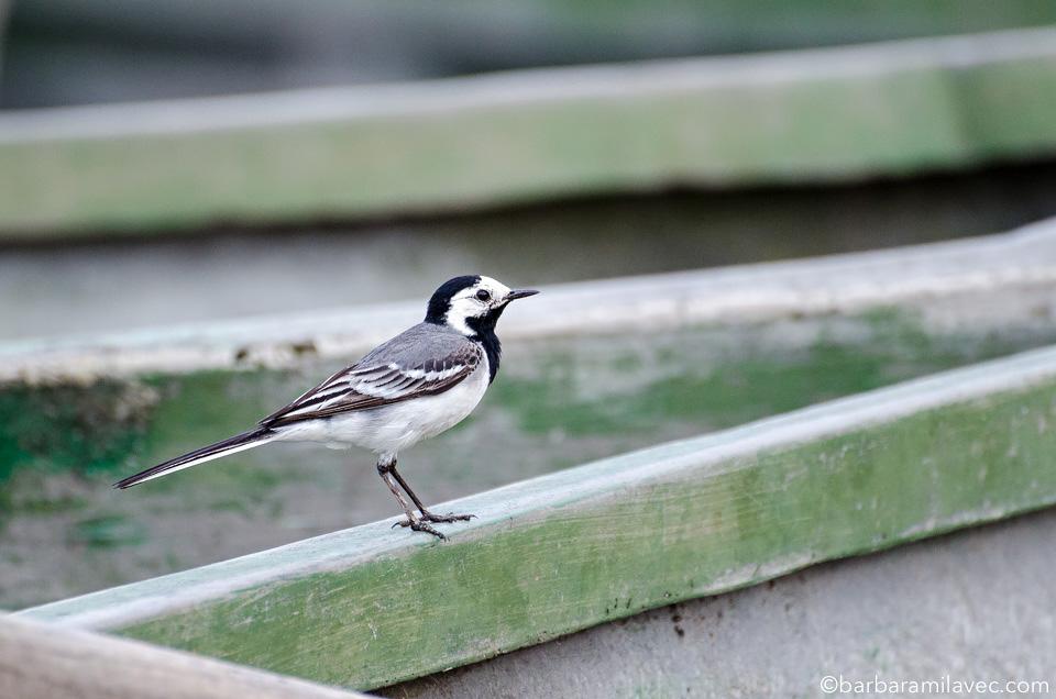 05-nature-conservation-photographer