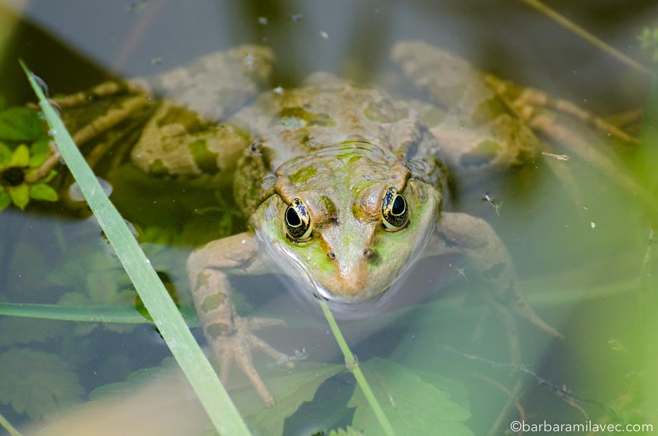 14-nature-conservation-photographer