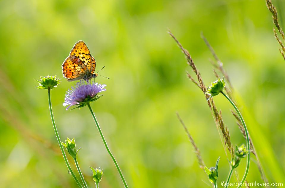32-nature-conservation-photographer